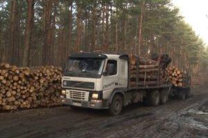 Польша: в 2021 году объем продаж круглого леса превысит 40 млн м³