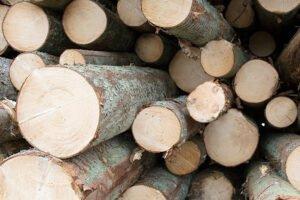 Södra повышает цены на еловый пиловочник