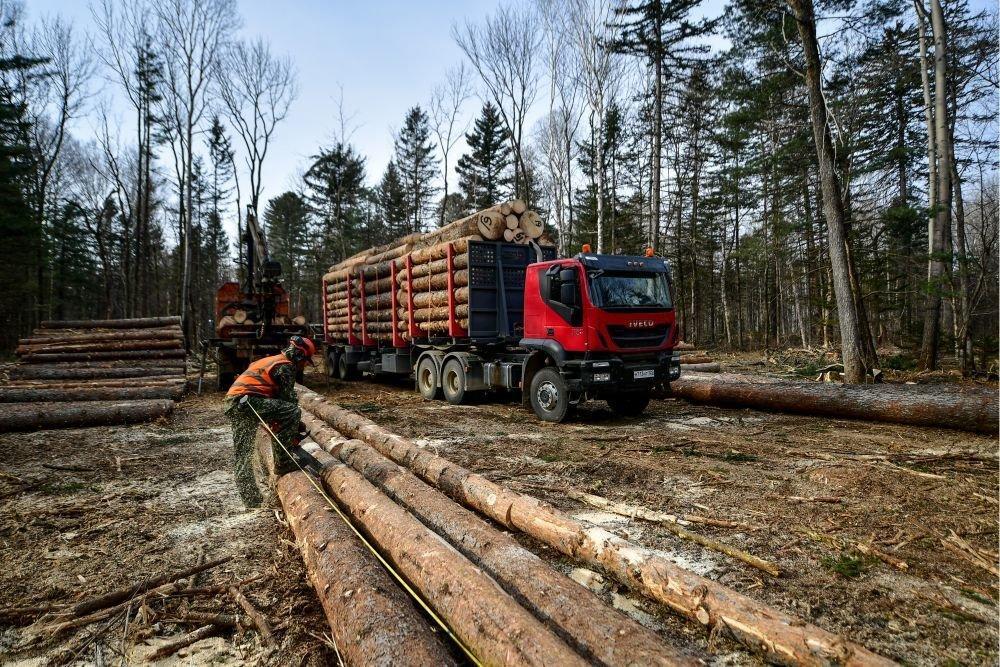 РФ: Контроль за лесными инвестпроектами будет ужесточен +