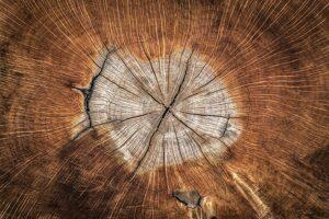 В эпоху пандемии Вьетнам стал одним из ведущих экспортеров лесоматериалов