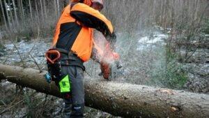 Лесовладельцы Австрии требуют справедливой доли добавленной стоимости