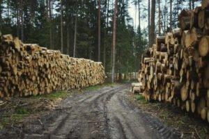Польша: продажи круглого леса останутся выше 40 млн м³