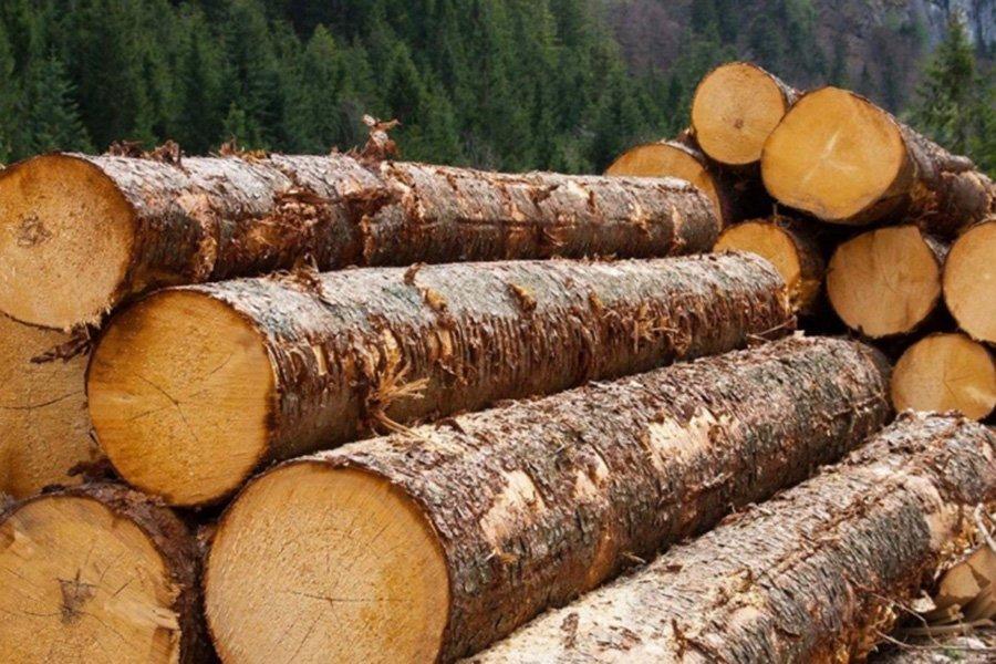 Запрет на экспорт необработанной древесины подвигнет китайских инвесторов открывать перерабатывающие предприятия в России