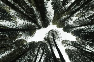 Импакт-инвестиции и устойчивое лесное хозяйство