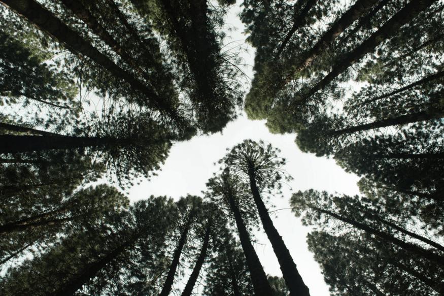 You are currently viewing Импакт-инвестиции и устойчивое лесное хозяйство