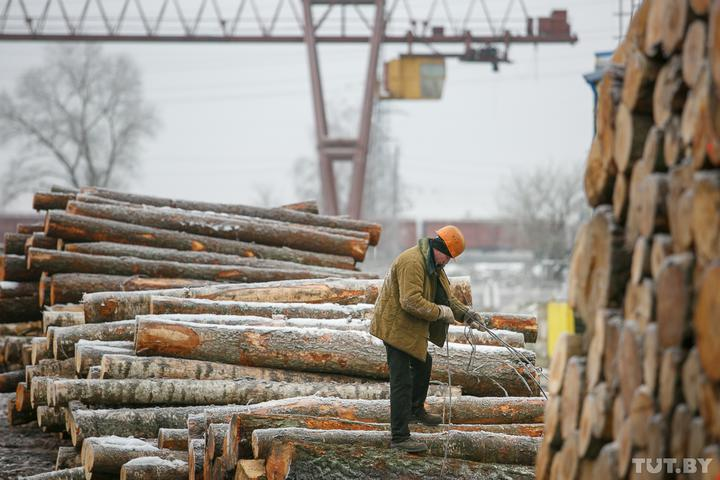 Закрыть нельзя объединить. Минлесхоз хотят отдать под крыло концерна «Беллесбумпром»
