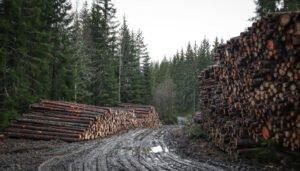 Норвегия: Невозможно реализовать  балансовую древесину