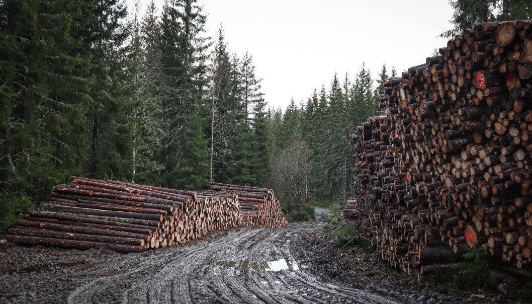 You are currently viewing Норвегия: Невозможно реализовать  балансовую древесину