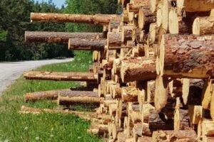 Лесные компании Юго-Восточной Эстонии ищут сырье в Беларуси