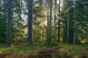 Литва: Рынок древесины демонстрирует признаки восстановления после резкого падения. Средняя цена на древесину  выросла на 20%.