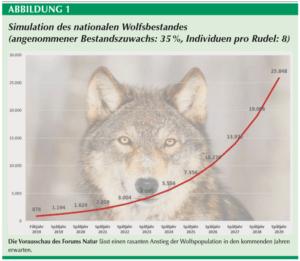 Подсчет волков в Германии: разрыв официальных  данных с реальностью растет