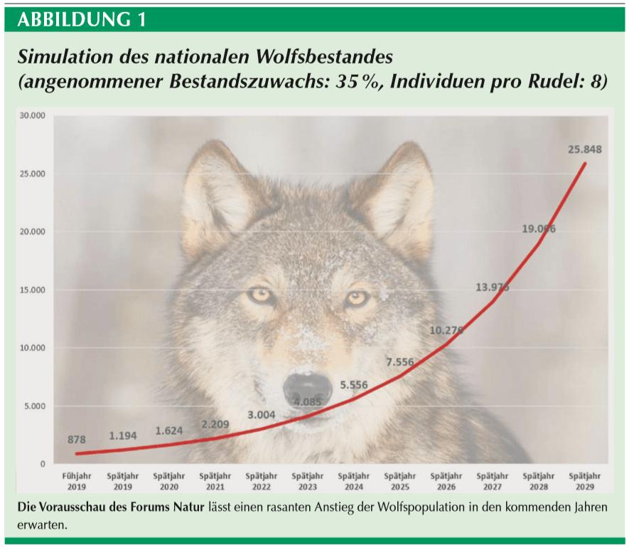 You are currently viewing Подсчет волков в Германии: разрыв официальных  данных с реальностью растет
