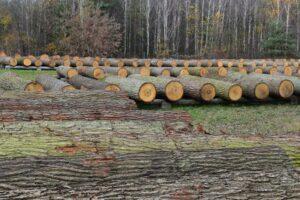 Древесина с аукциона в Люблине ценится дорого и не только в Польше