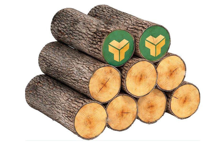 Read more about the article Спрос на круглый лес в Беларуси превышает предложение