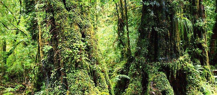 Какие типы лесов могут накапливать больше всего углерода и при каких условиях?