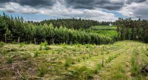 В Польше создание лесоустроительных планов для частных хозяйств финансируют за счет средств Лесов Панствовых