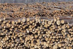 В октябре 2020 г. цены на пиловочник в Финляндии выросли на 1%