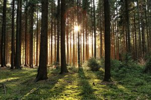 Благодаря интересу к лесной биоэкономике принц Уэльский инициировал амбициозный план по инвестированию в природу.