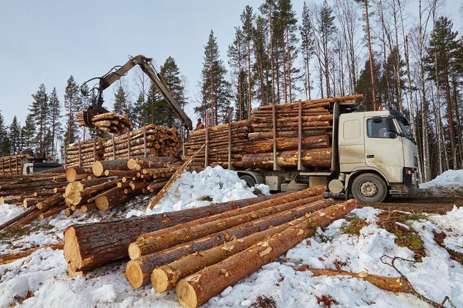 Segezha Group переводит учет и контроль вывозки древесины на цифровую систему диспетчеризации