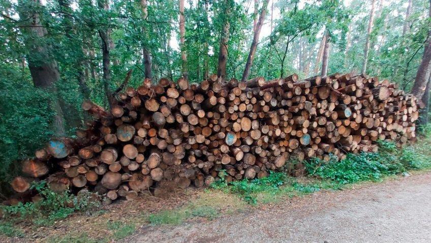 Лесные ассоциации критикуют ограничения на заготовку леса