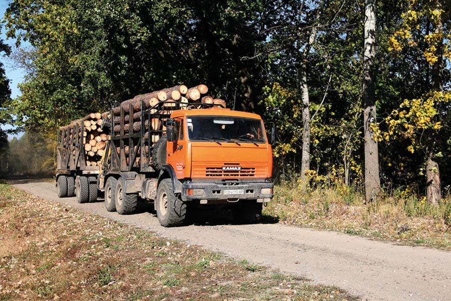Украина: цены на сосновый пиловочник в IV квартале растут