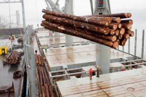 Экспорт древесины и бревен из России в январе-сентябре 2020 года: экспорт древесной целлюлозы вырос