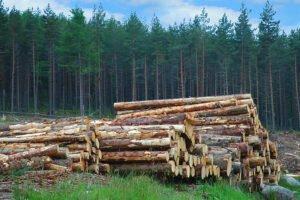 Шотландская лесная инициатива посеяла семена устойчивости для строительной отрасли в Великобритании