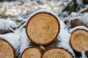 С начала 2021 года в России начнут действовать новые правила учета древесины