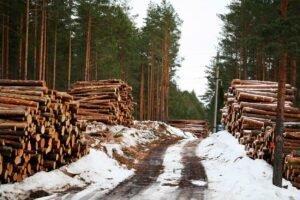 Самые крупные лесовладельцы в Латвии – шведы