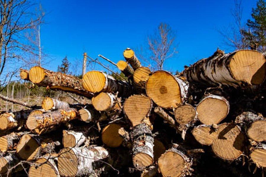 Новые правила для кругляка: что должна сделать Украина с мораторием на экспорт леса