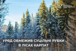 Правительство ограничило сплошные рубки в лесах Карпат