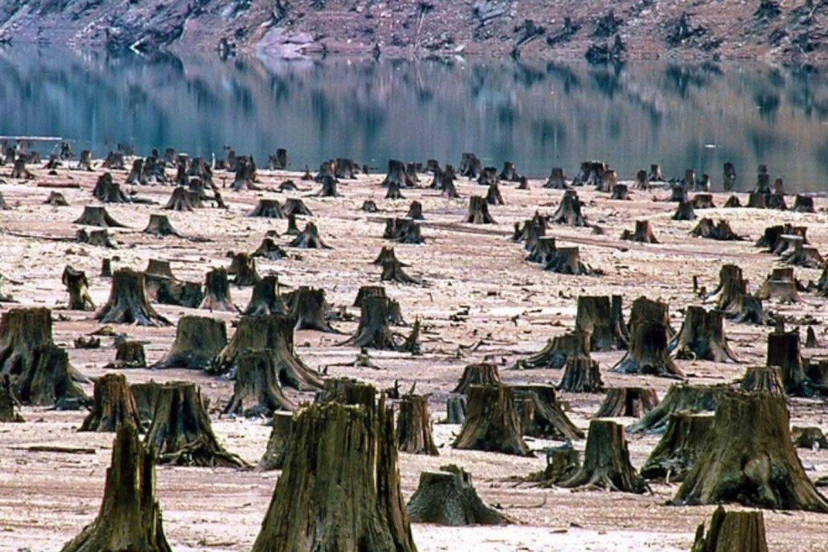 Фокус с кругляком: почему не прекращаются незаконные вырубки леса
