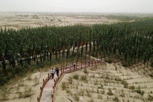 Леса отвечают на призыв к улавливанию углерода