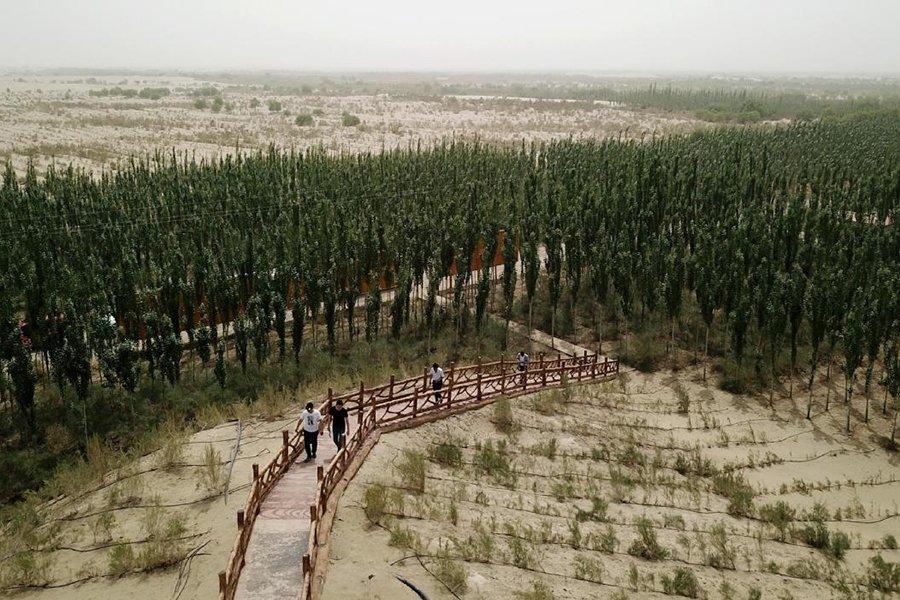 You are currently viewing Леса отвечают на призыв к улавливанию углерода