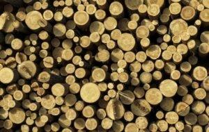 Очередная запятая в диалоге об экспорте древесины
