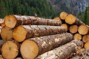 Лесные компании получают место в системе отслеживания древесины