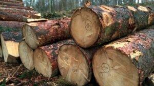 Похвала и критика закона о компенсации ущерба нанесенного лесам