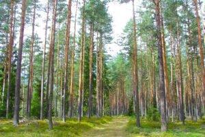 Read more about the article Доходы Латвийской лесной администрации от продаж упали на 11%