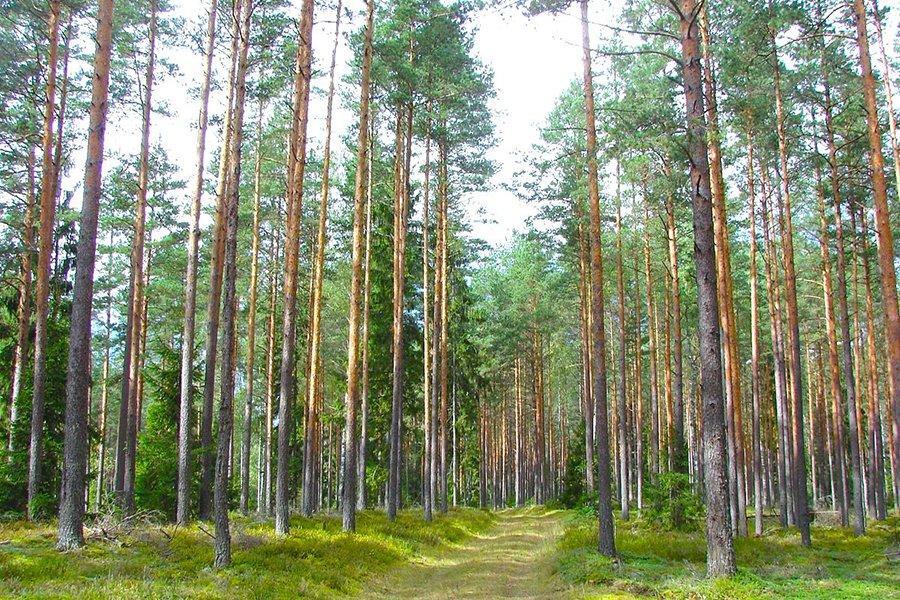 Доходы Латвийской лесной администрации от продаж упали на 11%