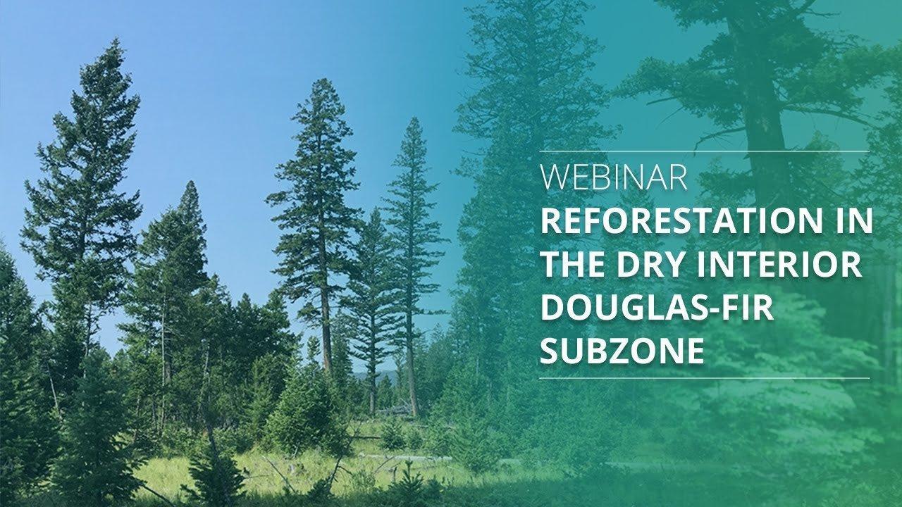 Лесовосстановление в сухих местообитаниях подзоны Дугласовой пихты