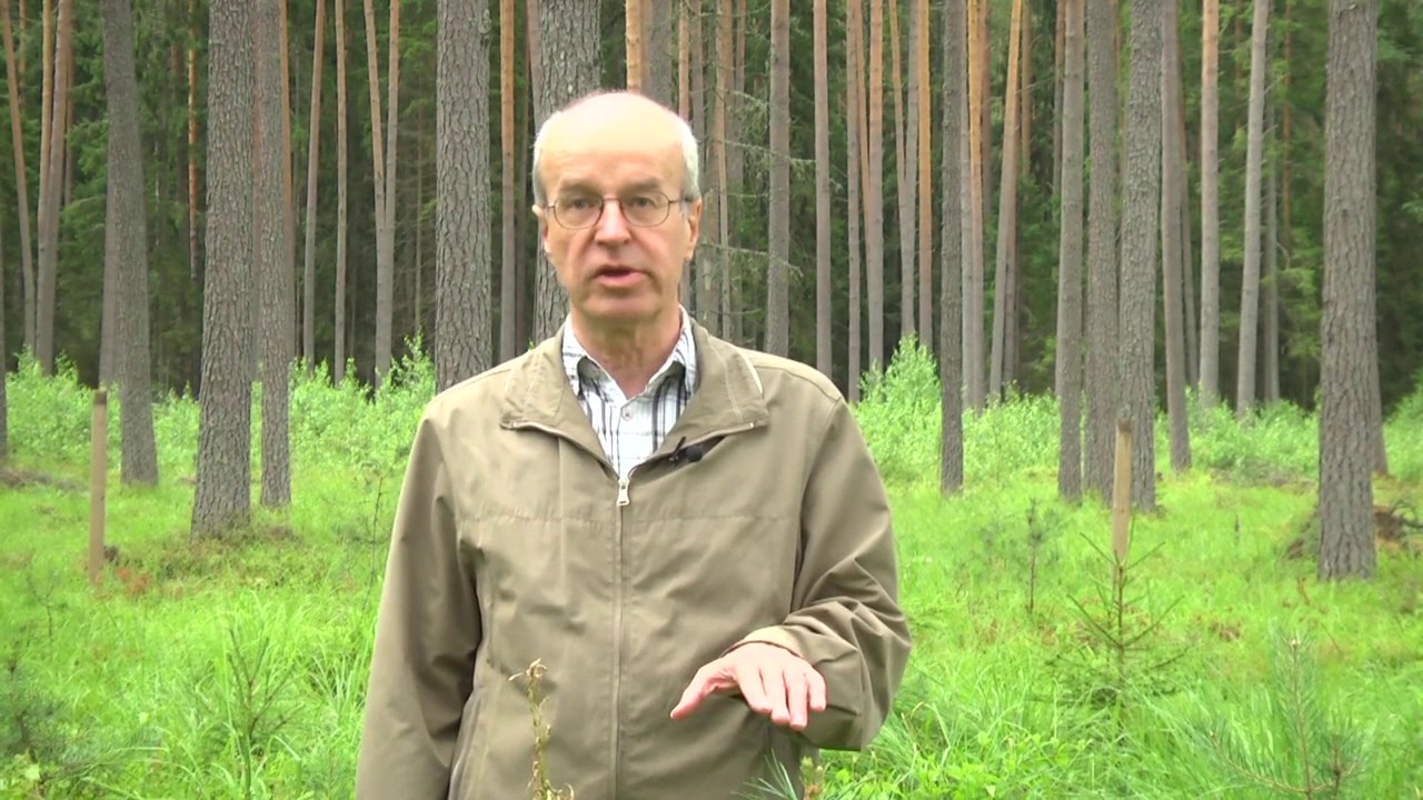 Председателем совета RMK избран Харди Туллус