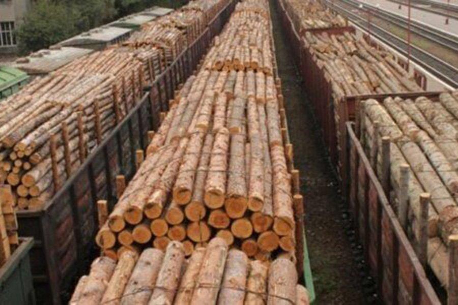Европа ожидает окончательного решения по спору между Украиной и ЕС о запрете экспорта леса-кругляка до конца года
