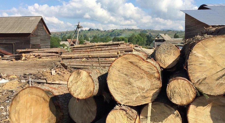 Незаконний обіг деревини в Україні становить приблизно 5 млрд грн на рік, — Абрамовський