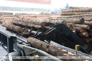 Беларусь: правительство увеличило таксовую стоимость на древесину на корню