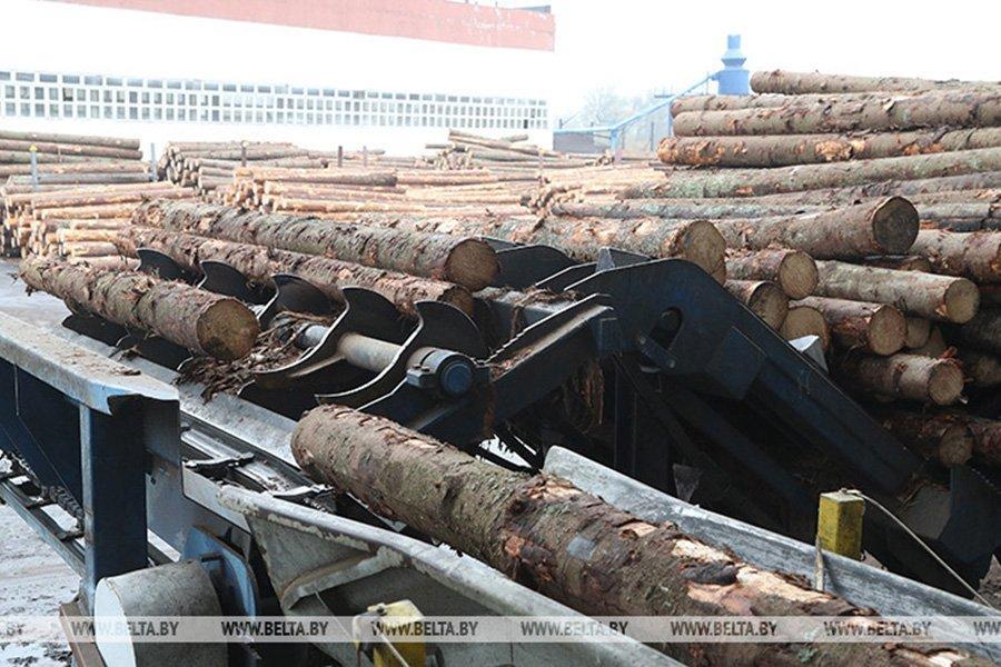 You are currently viewing Беларусь: правительство увеличило таксовую стоимость на древесину на корню