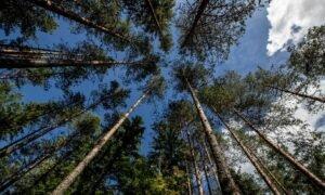 Read more about the article Лесной сектор: зеленый поворот должен быть одним из приоритетов нового правительства