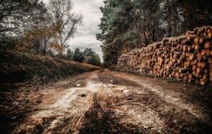 Read more about the article Реформаторы в «лесотень» не ходят