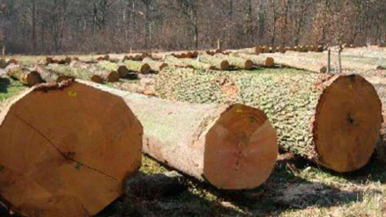 Стабильные предложения ценных сортиментов дуба  в Нижней Франконии
