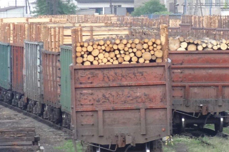 Арбитражный суд признал недопустимым запрет на экспорт круглого леса