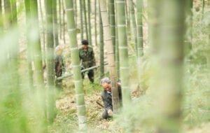 Бамбук приносит процветание фермерам в Гуйчжоу